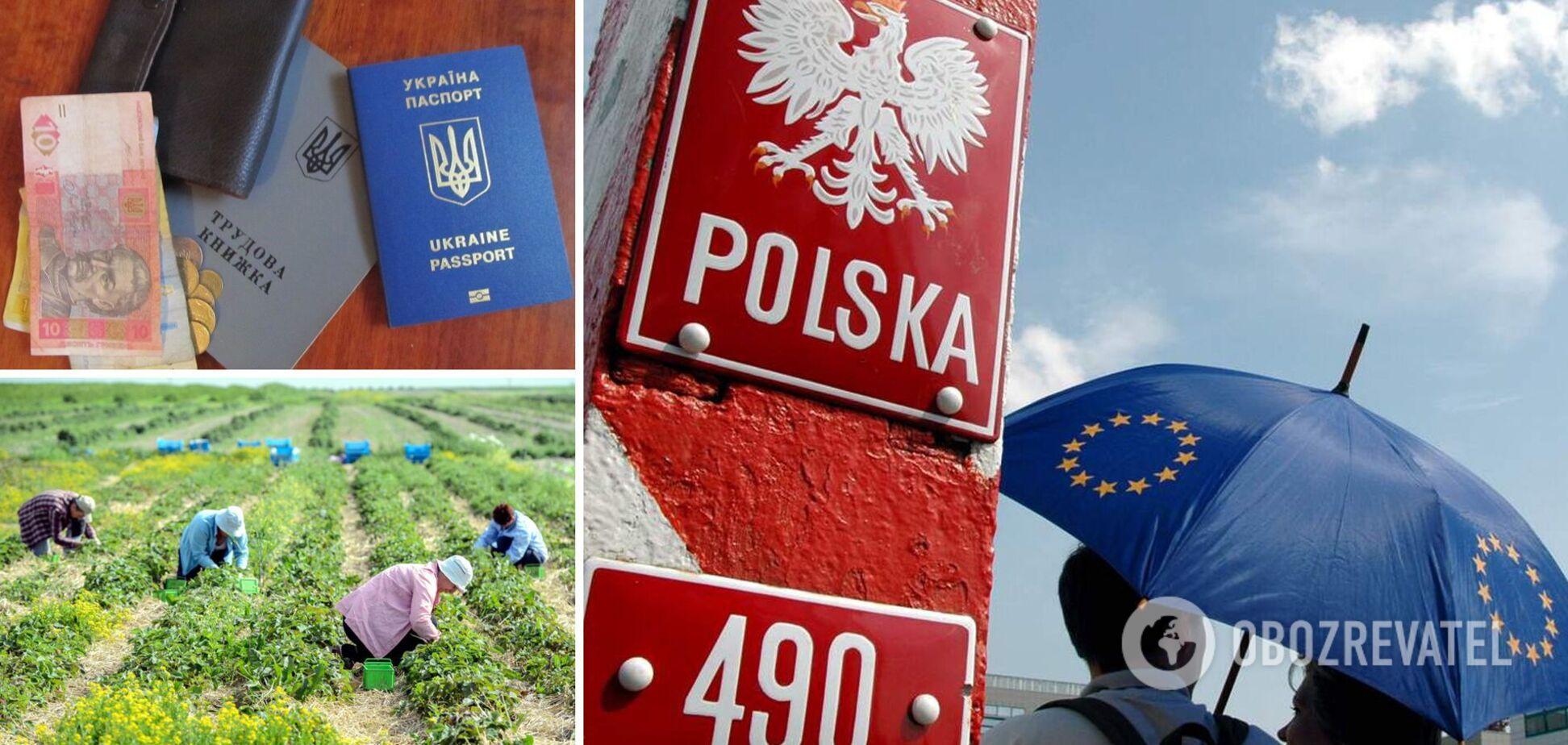 Зарплати для заробітчан у Польщі підвищать